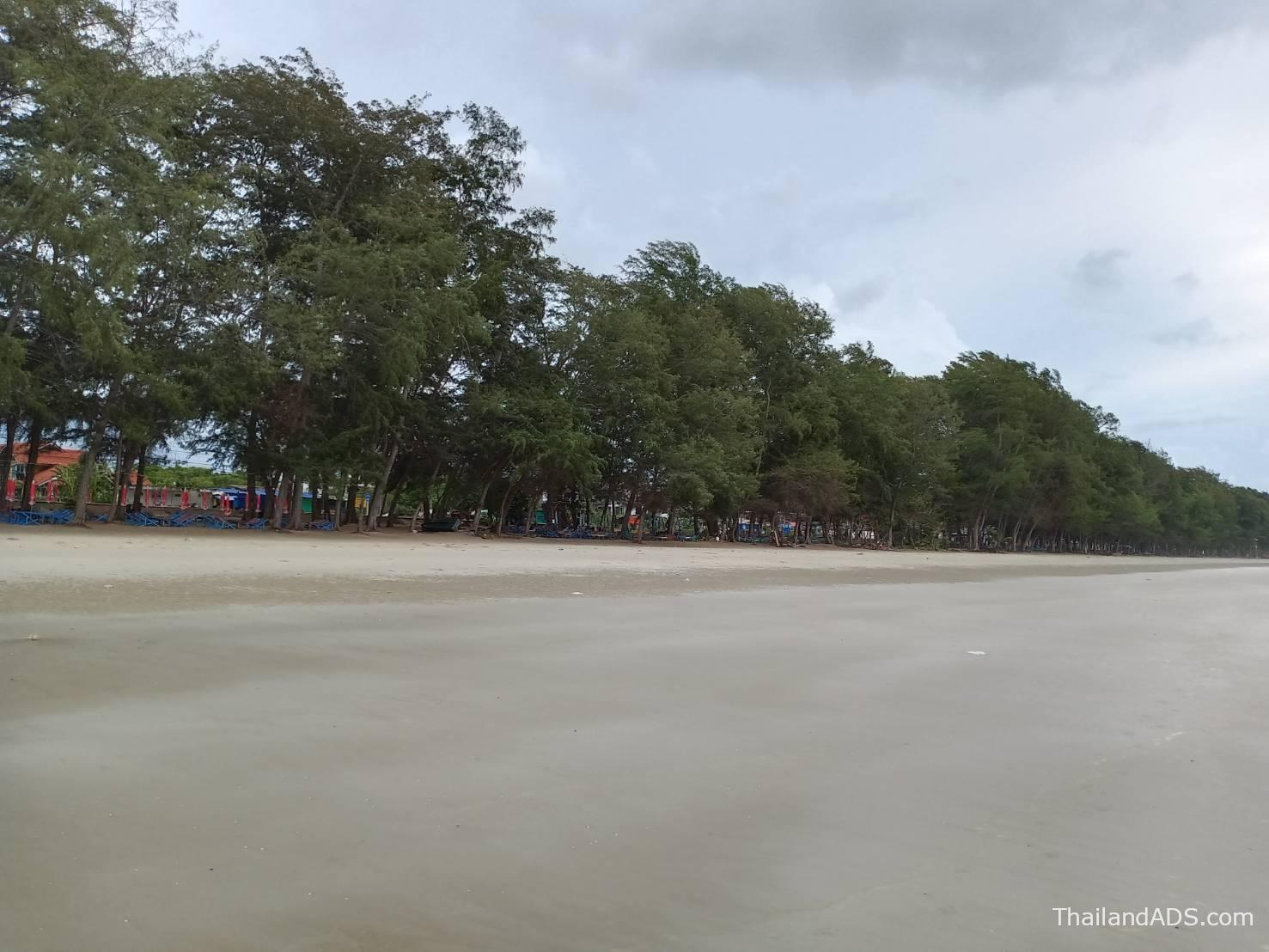 Suanson Beach with Trees